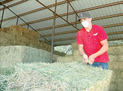 Cole Rhea has been working at Olsen's Grain in Chino Valley for several months. The 17-year-old who has been working with livestock his entire life says he has noticed a steady rise in hay prices this past year. Olsen's also has stores in Dewey-Humboldt and Prescott.<br> Photo courtesy Matt Santos