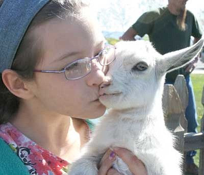 Trib Photo/Briana Lonas<br> Shayla Fryear, 10, cuddles up to a baby goat in the petting zoo during the EGGstravaganza and Family Arts Festival at the Prescott Valley Civic Center Saturday.