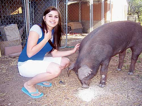 Courtesy photo<br> Cortni Yorba, a junior at Mingus Union High School hopes to at least break even with her ag class project, a Duroc pig named Benvolio, during the Organized Youth Livestock Auction May 2 during the Verde Valley Fair.