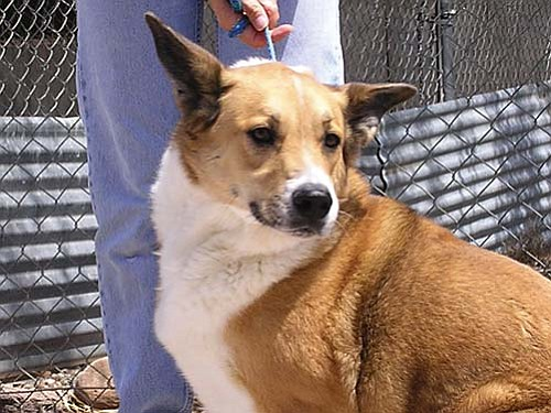Pet of the Week is Barney. He is a very gentle Shepherd mix looking for a nice person to go home with.