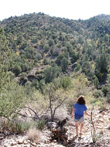 The trails within Cedar Bench Wilderness are often hard to follow. Hikers should be on the lookout for rock cairns, broken branches and other markers, and have basic map-reading abilities.<br /><br /><!-- 1upcrlf2 -->