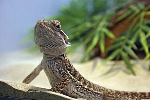 Small pets, such as rabbits, fish, birds and reptiles are available from Pet Kingdom in Cottonwood. VVN/Philip Wright