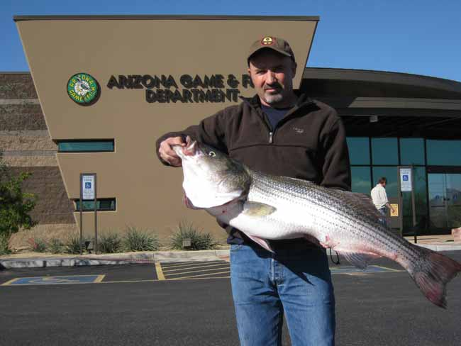 Fishing new state record striper caught during major for Lake pleasant az fishing