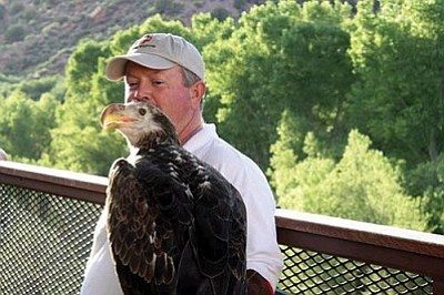 Joe Miller of Liberty Wildlife with 3-year-old bald eagle Sonora on the Verde Canyon Railroad.