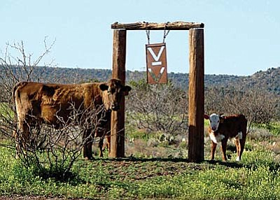 The V Bar V Ranch is a model Arizona Agricultural Experiment Station. It runs from Camp Verde 30 miles east, and is between 4 and 5 miles in width.