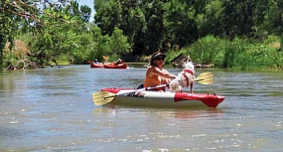 Kayaking the Verde River is Becky O'Banion, Clarkdale Mayor Doug Von Gausig's wife, and their dog Iris. Clarkdale has entered into an agreement with the State Parks Board for enhancement of the Tuzigoot River Access Point at Tuzigoot Bridge. Photo courtesy of Doug Von Gausig<br /><br /><!-- 1upcrlf2 -->