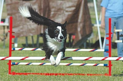 Petapalooza is more than a pet adoption event. It is an opportunity for pet owners to share a day with their own pets, watch numerous demonstrations, including agility dogs and police dogs, and learn about responsible pet ownership. VVN/Steve Ayers