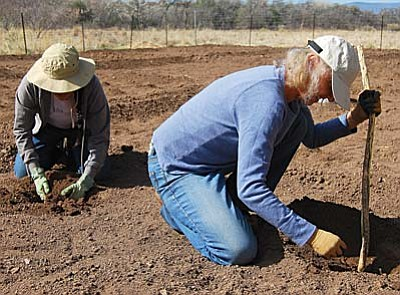 VVN/Bill Helm<br /><br /><!-- 1upcrlf2 -->Shalene Yazzie of Flagstaff, and Gwynne Reese of Sedona, from left, plant Cushaw Squash seeds Friday at the Montezuma Well garden.