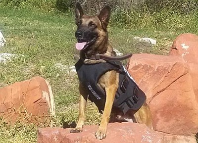 K-9 Jax shows off his new vest.