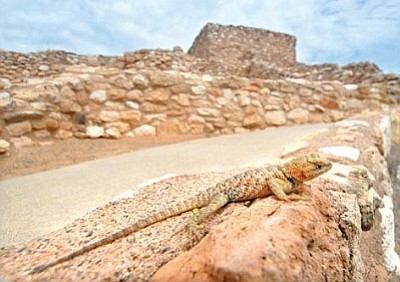 Tuzigoot National Monument saw its attendance drop nearly 28 percent from 1990 to 2013.