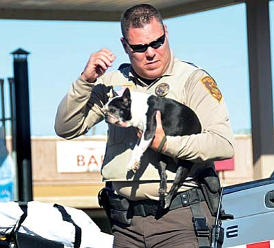 Yavapai Deputy Sheriff Craig Bollen carries a dog from a pickup involved in the crash in front of the Cornville Market Wednesday at 1:30 p.m. Four dogs in the cab of the pickup were not injured, according to police at the scene. VVN/Vyto Starinskas