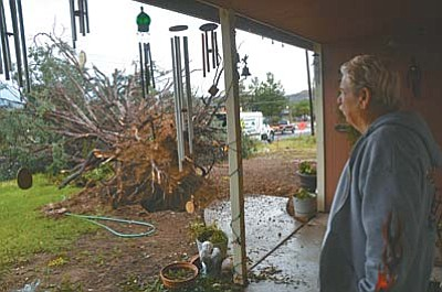 Tuesday's noontime monsoon in Cottonwood appears to have taken down several trees, lots of branches and leaves, temporarily flooded some city streets and washes, but did not cause any major damage. Jesse Nuss looks at a cedar that was knocked down the by the strong winds of the storm in front of his house on Mingus Avenue. VVN/Vyto Starinskas