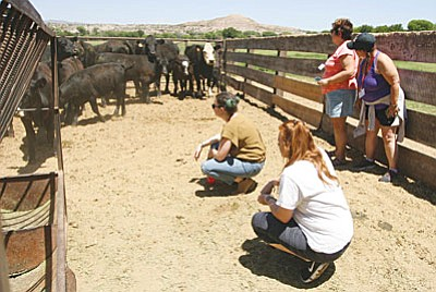 Tuesday, about 30 Arizona educators learn about the ranching industry at Andy and Mary Beth Groseta's W Dart Ranch, part of the 26th annual Summer Ag Institute tour. (Photo by Bill Helm)