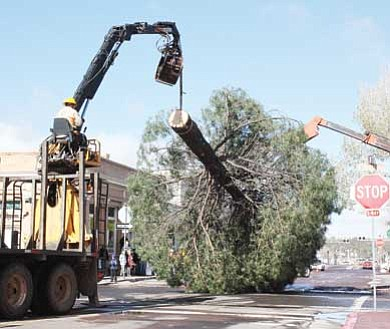 Clara Beard/WGCN<br>  The community Christmas tree moves towards its resting place Nov. 22. The tree will be decorated by Grand Canyon Railway crews and will be lit Saturday.