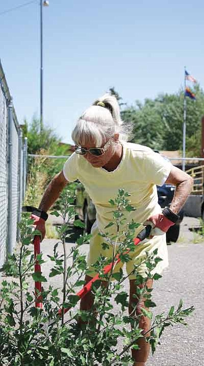 Photo/WGCN<br> Carol Glassburn can be found frequently around Williams donating her time to make the city a better place to live.