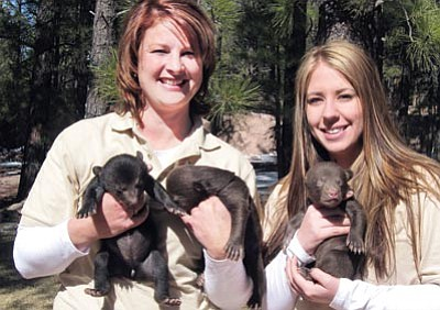Submitted photo<br> Bearizona Chief Operating Officer Vanessa Stoffel (left) and Operations Manager Jocelyn Monteverde hold three new bear cubs born during the winter months at Bearizona.