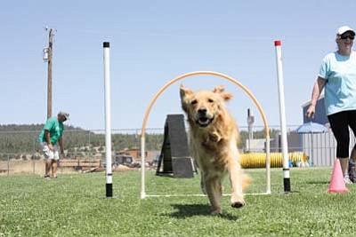 Energetic agility dogs and their owners sprint through challenging obstacles during last weekend's Turns N' Wraps event held at Cureton Park. Clara Beard/WGCN