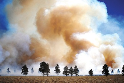 A prescribed fire burns northeast of Parks on the Williams Ranger District in January. So far, the Forest Service has completed prescribed burns on about 6,000 acres of land this fiscal year to reduce fuel loads and prevent wildfires. Photo/USFS