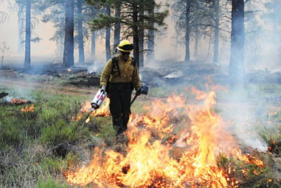 A Forest Service Fire Manager ignites a fire while working on the Sitgreaves Complex Fire burning on Sitgreaves Mountain east of Williams. Holly Krake/USFS