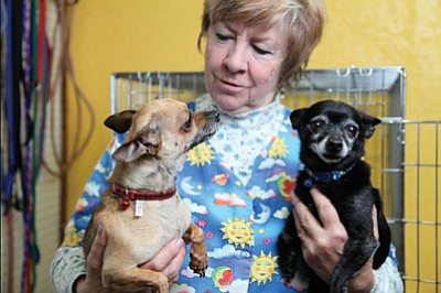 Many Tails Pet Grooming owner Bruni Loprieato plays with Gracie and George. The dogs are in need of new homes after being abandoned a few weeks ago. Ryan Williams/WGCN