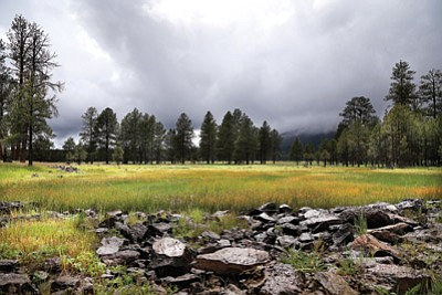Kaibab National Forest land south of Williams soaks up rainfall June 11. Fire managers are cautiously optimistic about fire danger despite a wet May.  Ryan Williams/WGCN