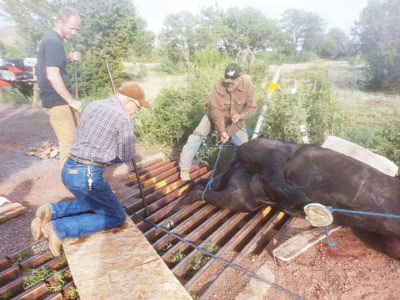 Community Response Saves Horse Red Lake Residents Free