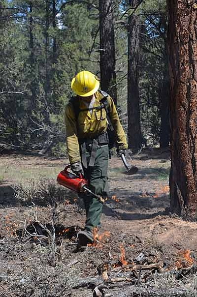 A firefighter backburns during the 2014 McCrae fire. Kaibab National Forest photo