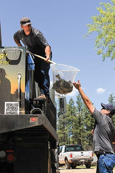 Steve Penrod (left) hands a net full of fish to Corey Meyer before the two release them in City Dam. Wendy Howell/WGCN
