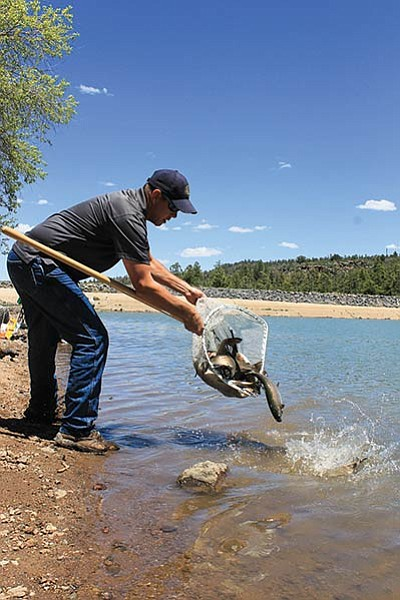 Fish culturist Corey Meyer releases Rainbow trout into City Dam. Wendy Howell/WGCN