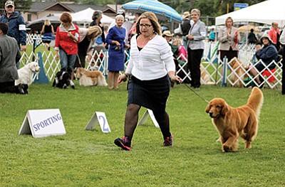A woman shows a dog in last years Flagstaff Kennel Club Dog Show in Williams. Ryan Williams/WGCN