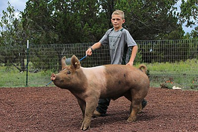 Trevor Hausmann exercises his pig Dozer in preparation for the Coconino County Fair. Wendy Howell/WGCN