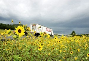 Recent and consistent summer rainfall helped quash wildfire fears over the typically dry months and topped yearly averages for the region, producing bright beds of wildflowers throughout the area.