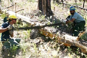 Wilderness Coalition volunteers and Forest Service staff teamed up to remove dangerous obstacles.