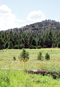 The Forest Canyon Estates Subdivision is proposed for 60-acres of land situated at the