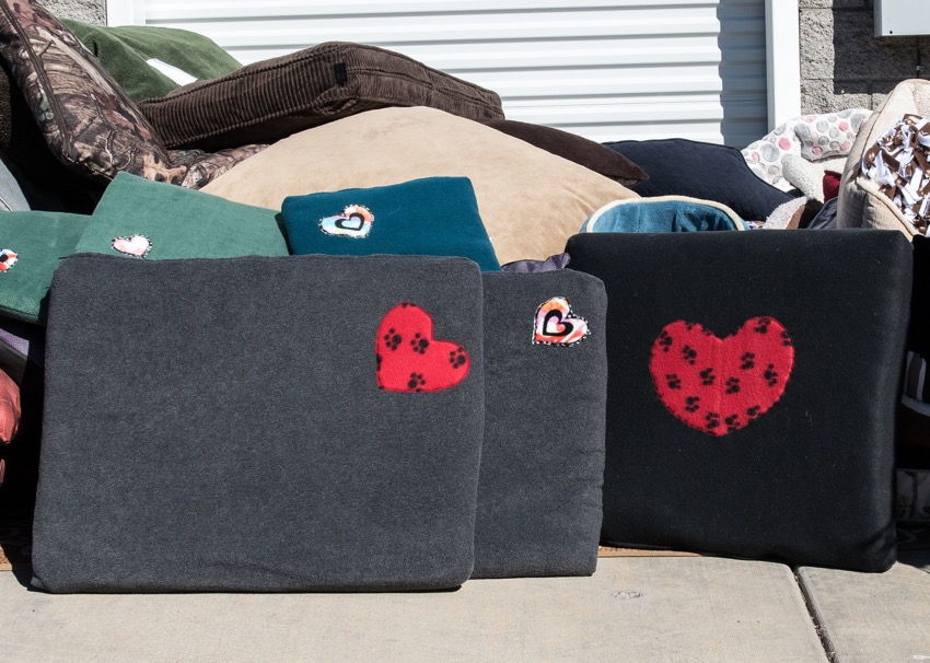 Pet Focus Beds Bring Comfort To Cats Dogs Of Low Income Families The Daily Courier