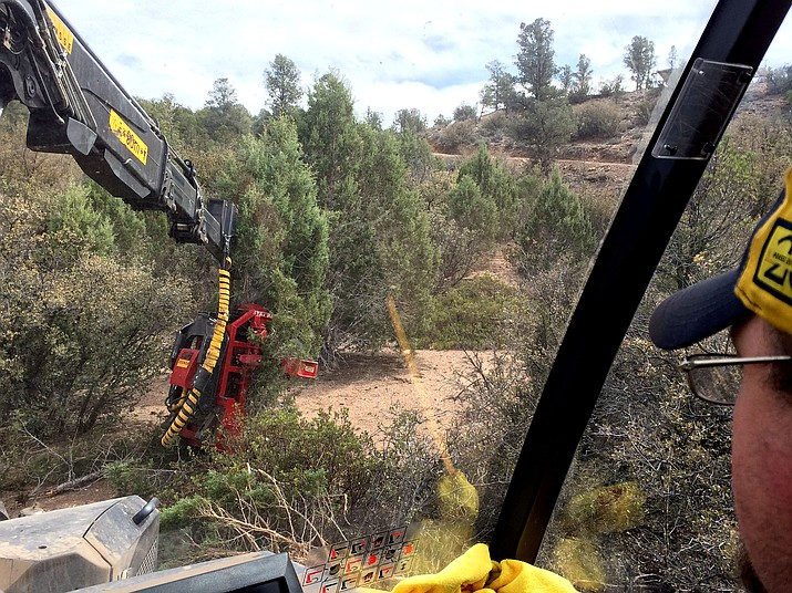 Ponsse equipment operator Phil Kiefer, 39, cuts down a juniper as part of a project to clear pinyon-juniper woodlands and study different harvesting methods for a potential biomass market.