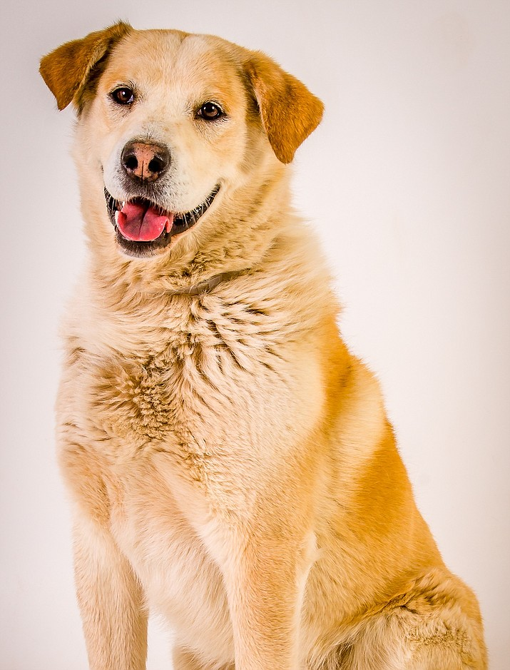 Oscar Jack is a 3-year-old Golden Retriever mix who will be an excellent hiking buddy for his future adopter. He walks nicely on a leash and enjoys exploring. Oscar Jack also loves playing in the water and remains neutral/indifferent to other dogs, which will make him a polite companion on the trail. Learn more about adopting Oscar Jack at Yavapai Humane Society, 928-445-2666.