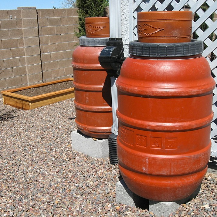 Two 50-gallon rain barrels supply free water for a small garden.