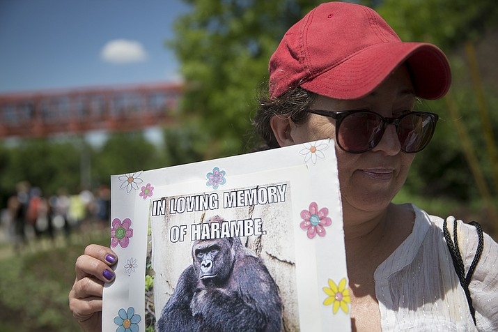 Alesia Buttrey of Cincinnati holds a sign with a picture of the gorilla Harambe during a vigil in his honor outside the Cincinnati Zoo & Botanical Garden, Monday, May 30. Harambe was killed Saturday at the Cincinnati Zoo after a 4-year-old boy slipped into an exhibit and a special zoo response team concluded his life was in danger.