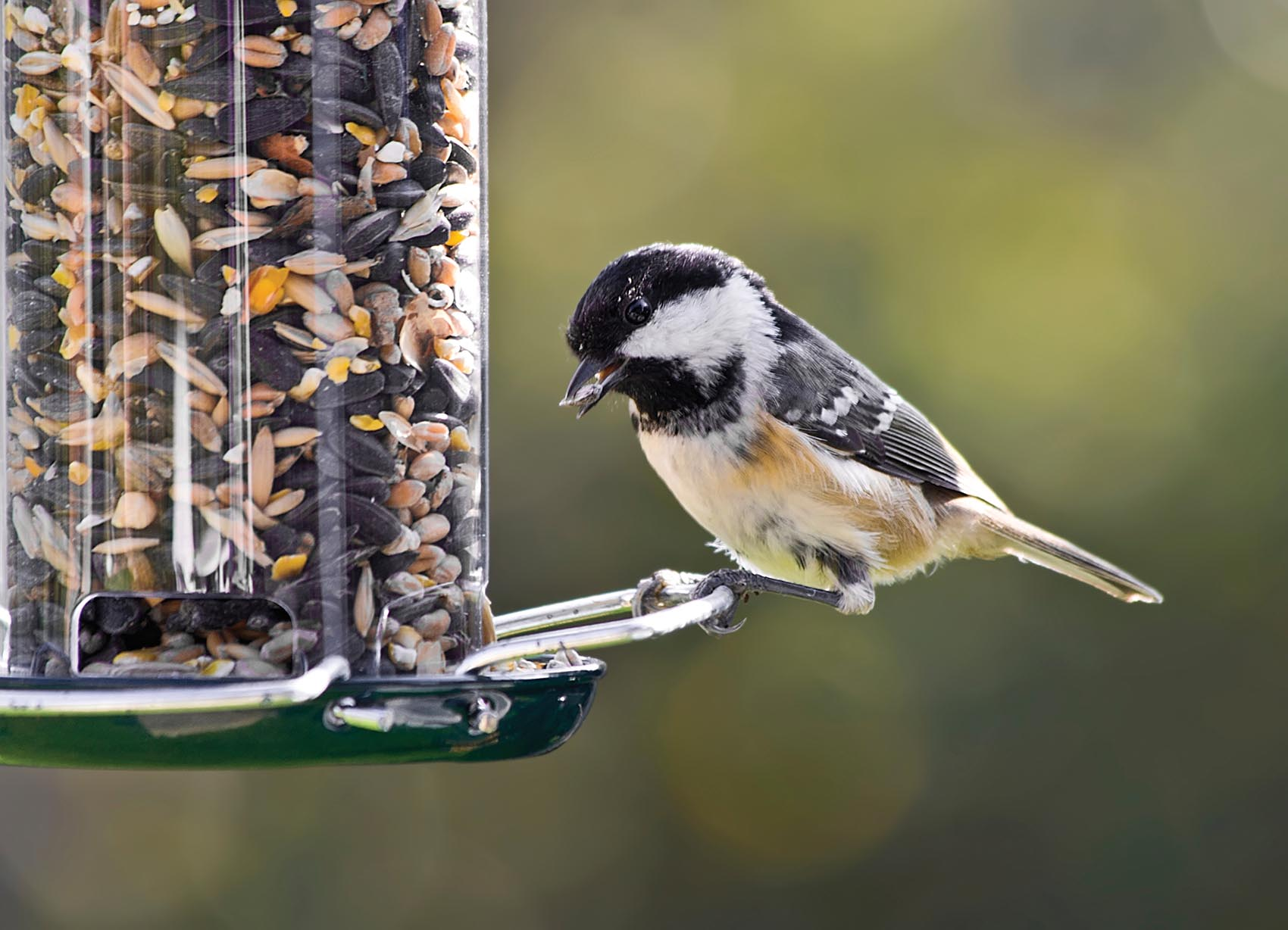 column bird seed preferences vary based on habitat the daily