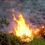 Hot spots crop up as fire burns through the hills on the south side of Yarnell Wednesday afternoon. (Les Stukenberg/The Daily Courier)