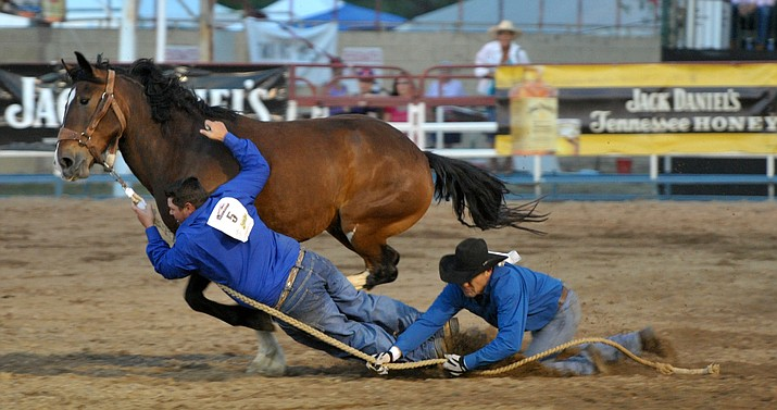 A wild horse team tries to hang on to their horse Wednesday night during the third performance of the Prescott Frontier Days World's Oldest Rodeo at the Prescott Rodeo Grounds.