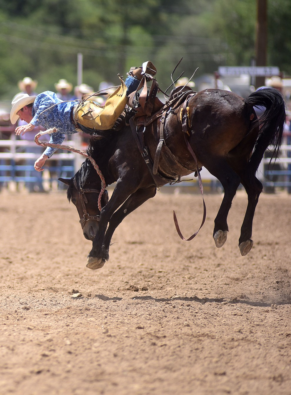 Miles Dewitt takes the hard way off but won the Ranch Bronc Riding with a 79 during the final performance of the 2016 Prescott Frontier Days Rodeo Monday afternoon. (Les Stukenberg/The Daily Courier)