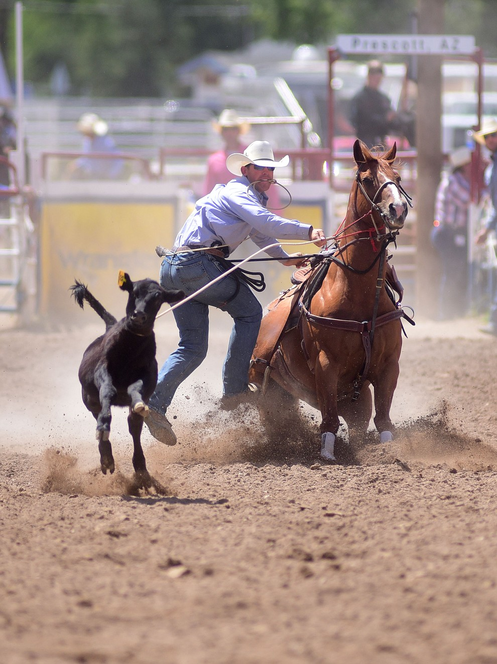 Ryle Smith has a 12.3 second run during the final performance of the 2016 Prescott Frontier Days Rodeo Monday afternoon. (Les Stukenberg/The Daily Courier)