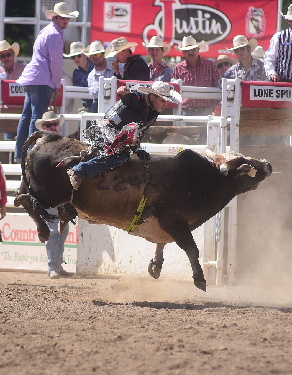 Steve Carter on Juicy Box during the final performance of the 2016 Prescott Frontier Days Rodeo Monday afternoon. (Les Stukenberg/The Daily Courier)
