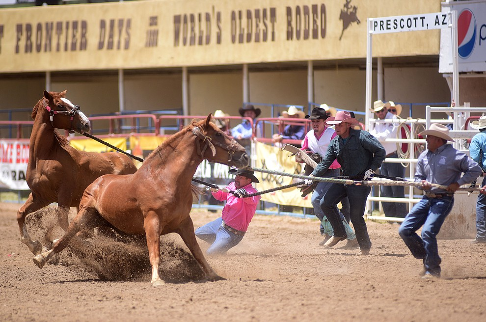 Wild horse racing during the final performance of the 2016 Prescott Frontier Days Rodeo Monday afternoon. (Les Stukenberg/The Daily Courier)during the final performance of the 2016 Prescott Frontier Days Rodeo Monday afternoon. (Les Stukenberg/The Daily Courier)