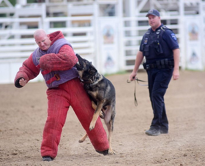 Tempe Police Department's Reed Ribotta and K9 Boomer during a public demonstration by some of the 70 dog and handler teams attending the 24th annual Arizona Law Enforcement K9 Association at the Prescott Rodeo Grounds Tuesday evening. (Les Stukenberg/The Daily Courier)