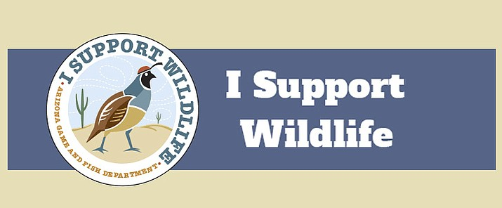 I Support Wildlife™ bridges the widening gap between wildlife facing new threats and a sharp increase in the cost of conservation. A membership allows people to explore Arizona's unique natural heritage while taking action to preserve our wildlife legacy for the future.