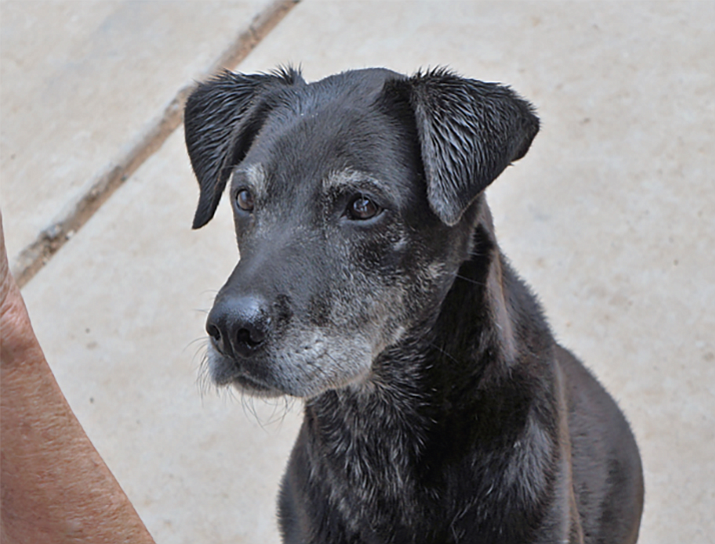 Buddy is available for adoption at Circle L.