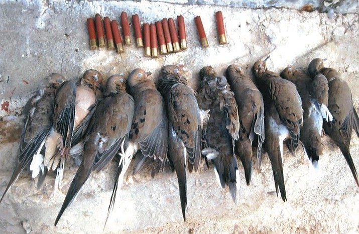 This was a limit of 10 doves that Don Martin took a few years ago using a 410 shotgun. The limit has now been raised to 15 birds per day.